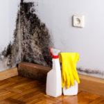 Plíseň na zdi a jak se jí zbavit