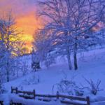 Ochrana stromů před mrazem