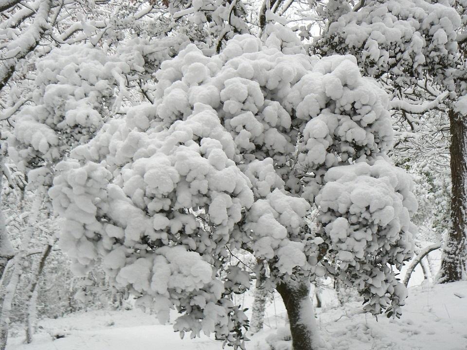 keř zima 1