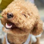 Jakého psa pro alergika?