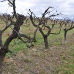 Prořezání a úpravy stromů