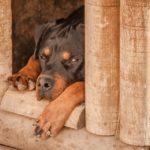 Jak vyrobit boudu pro psa svépomocí?