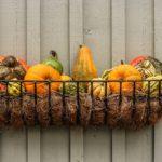 Podzimní truhlíky pro oživení vašich oken