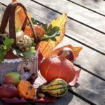 Podzimní dekorace do bytu – Tipy na výzdobu