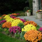 Jaké jsou nejlepší podzimní květiny?