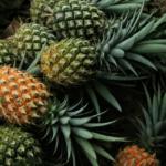 Jak vypěstovat ananas v květináči